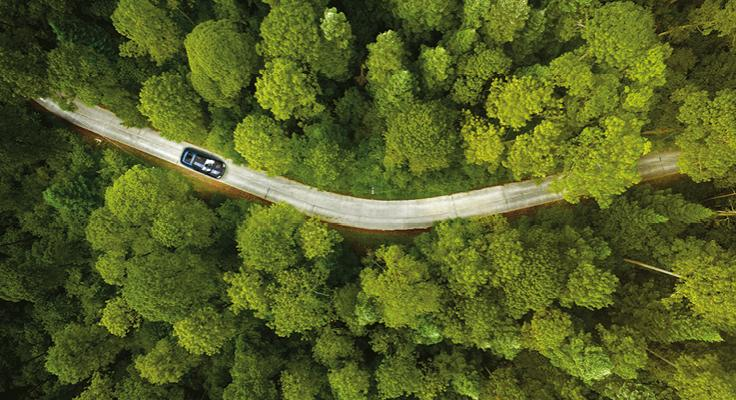 A car driving through a forest from an aerial view